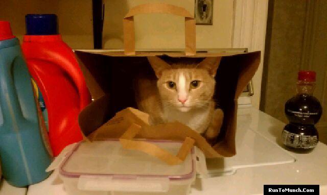 Jack in a bag