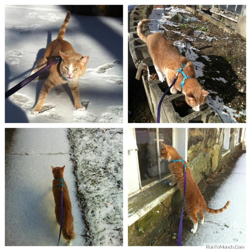 Winter Cat Walking
