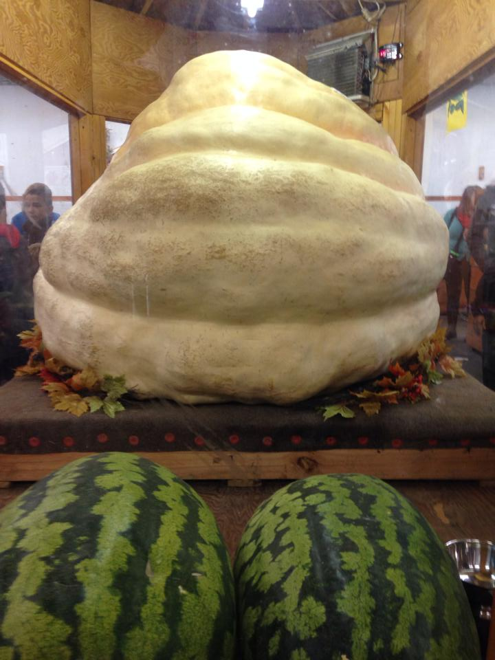 Topsfield Fair Pumpkin Melon
