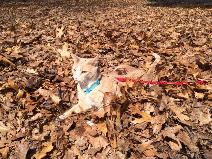 JackMeower on Leaves